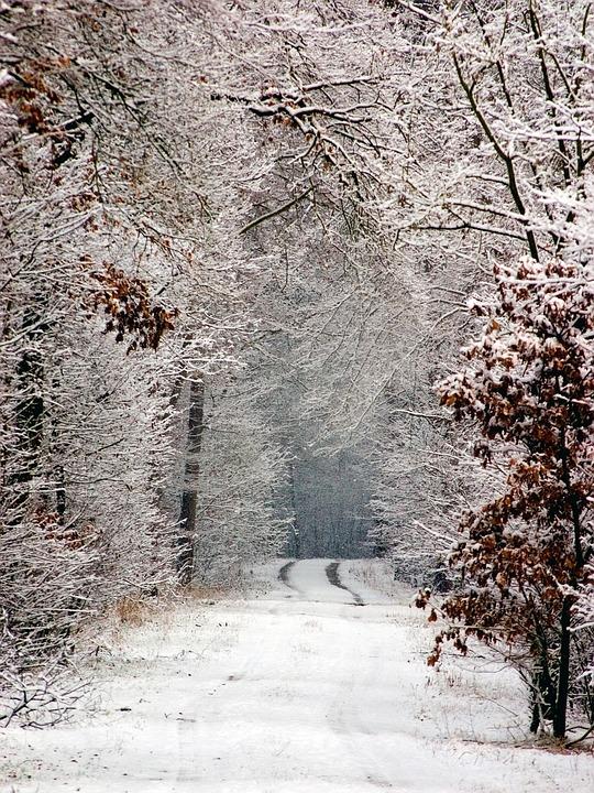 Winter, Snow, Snow Lane, Tracks In The Snow, Away