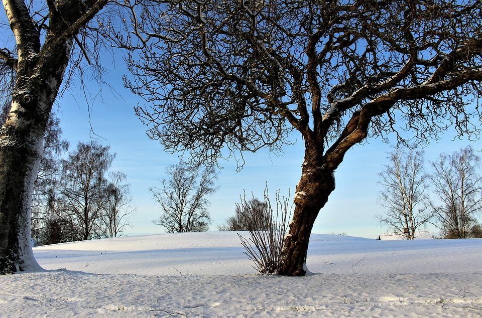 Winter, Snow, Landscapes, Tree, Snow Landscape