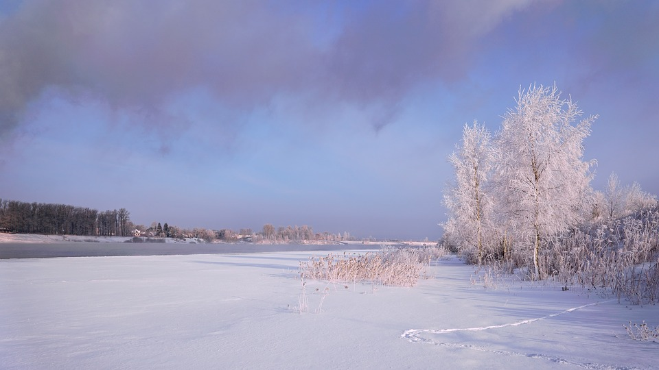 Winter, Snow, Leann, Frozen, Coldly, Nature, Ice, Tree