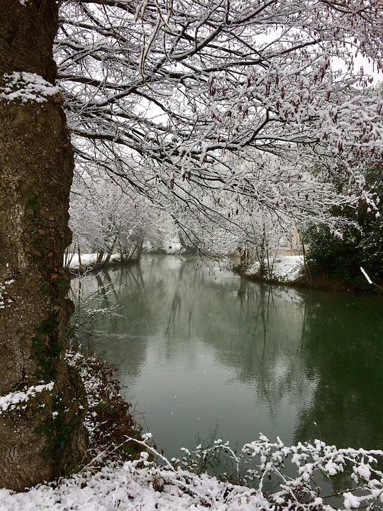 Tree, Nature, Snow