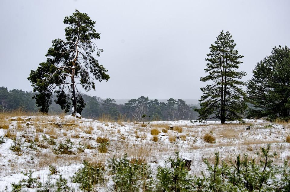 Snow, Heide, Trees, Landscape, Nature, Winter Landscape