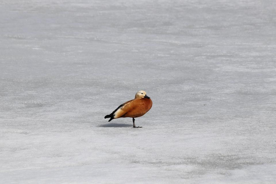 Bird, Winter, Snow, No One, Water, Living Nature
