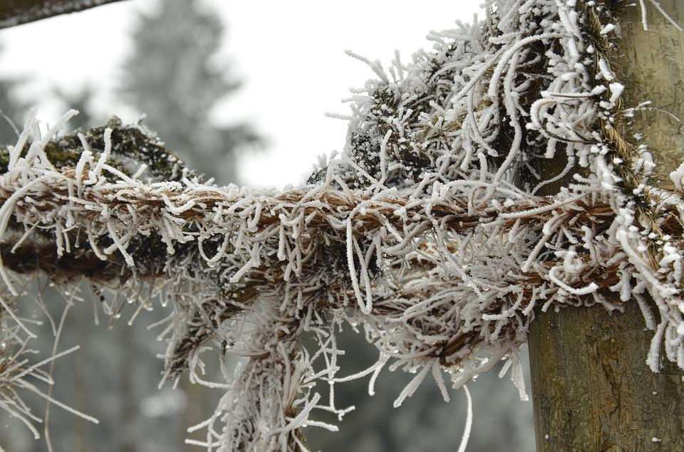 Ripe, Snow, Branch, String, White, Frozen, Freeze, Cold