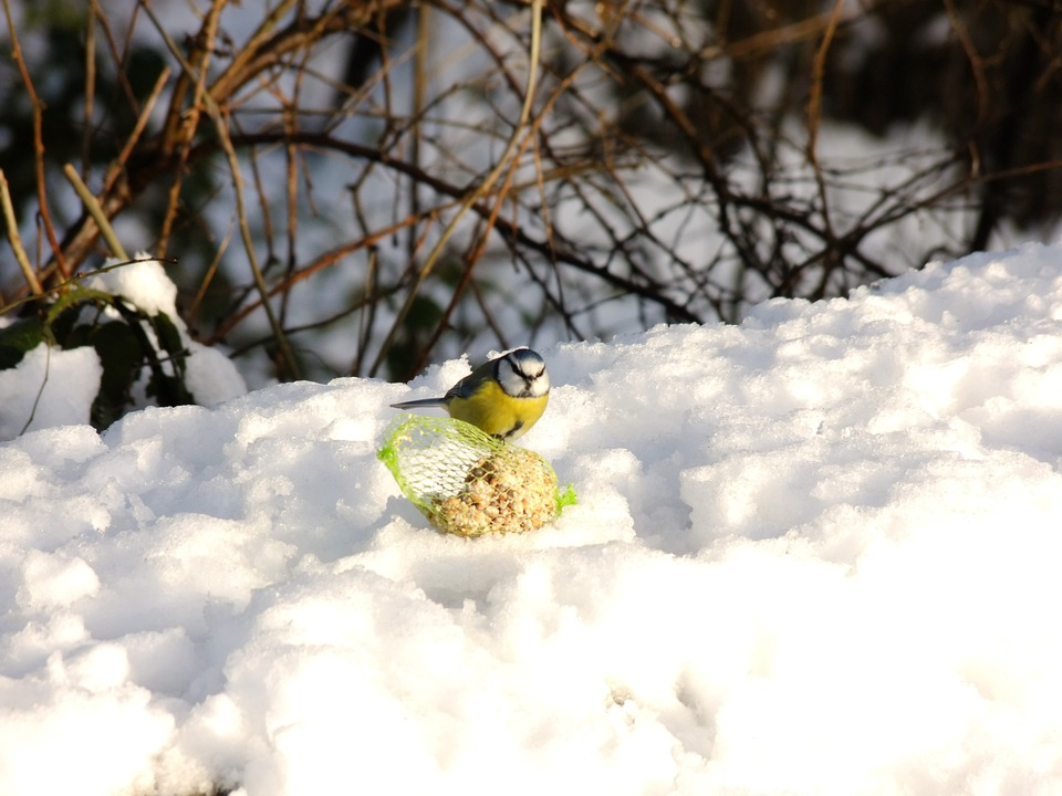 Nut Hatch, Snow, Winter, Bird, Fly, Wings, Feather