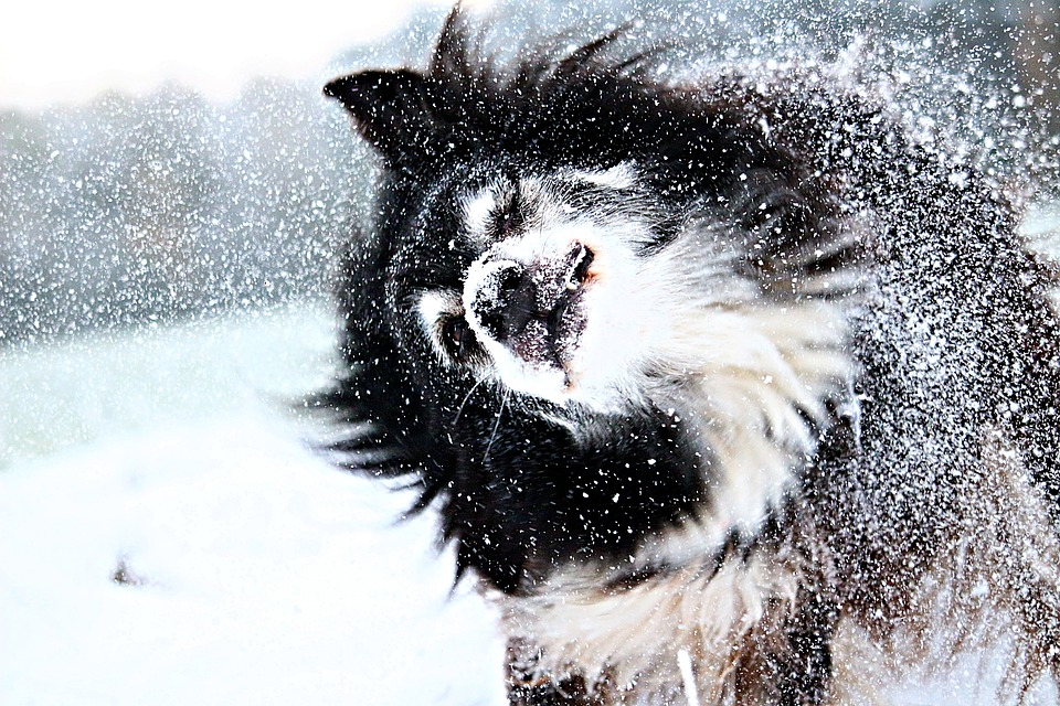 Snow, Dog, Border, Snowflakes, Winter, Dog In The Snow