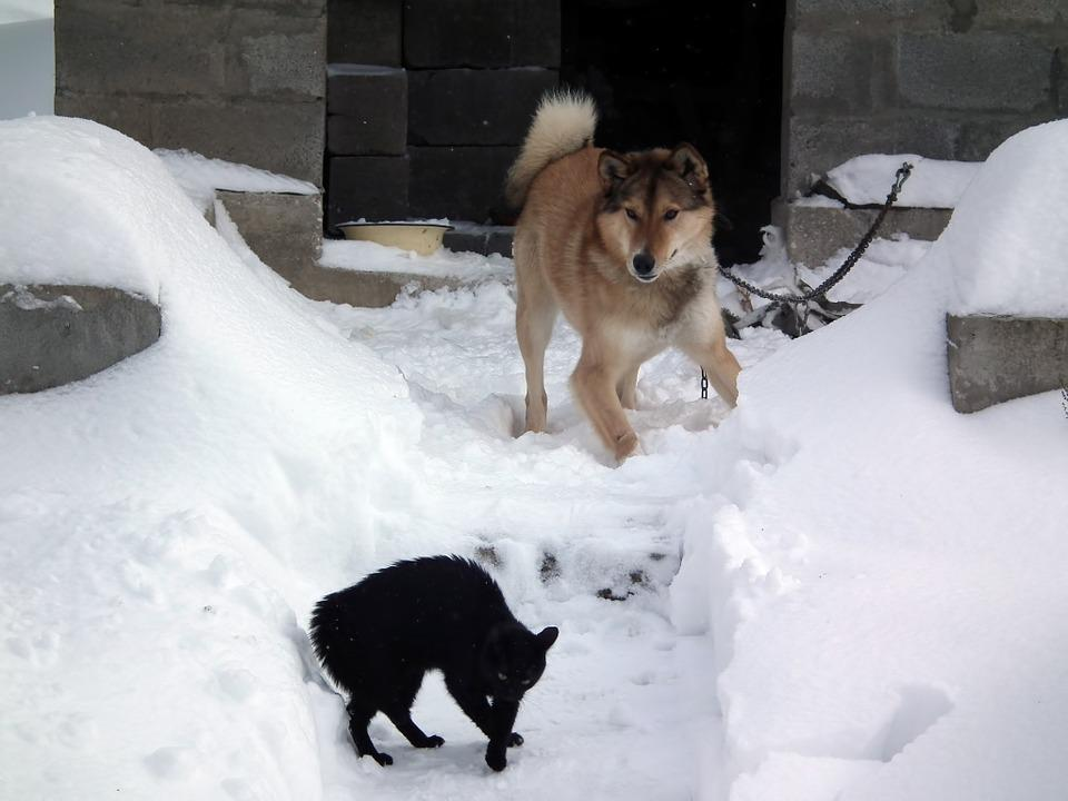 Dog, Cat, The Feud, Winter, Snow, Snowdrift, Cold
