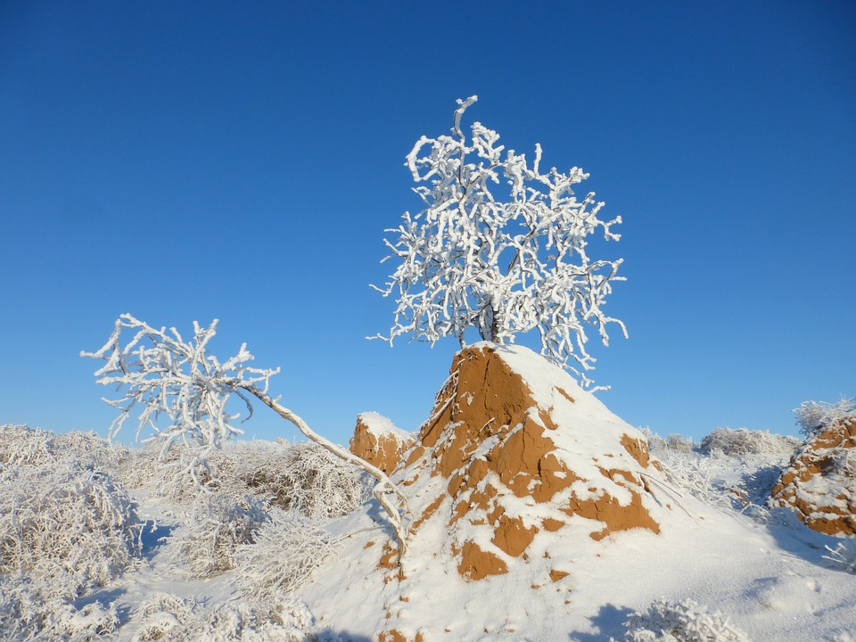 Winter, Steppe, Kostric, Frost, Snow, Field, Frozen