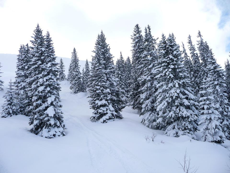Winter Forest, Snow, Winter, Wintry, Forest, Snow Magic