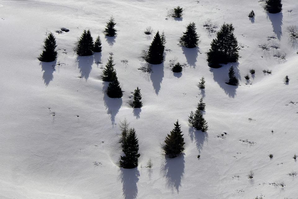 Winter, Snow, Cold, Frost, Frozen, Landscape, Tree