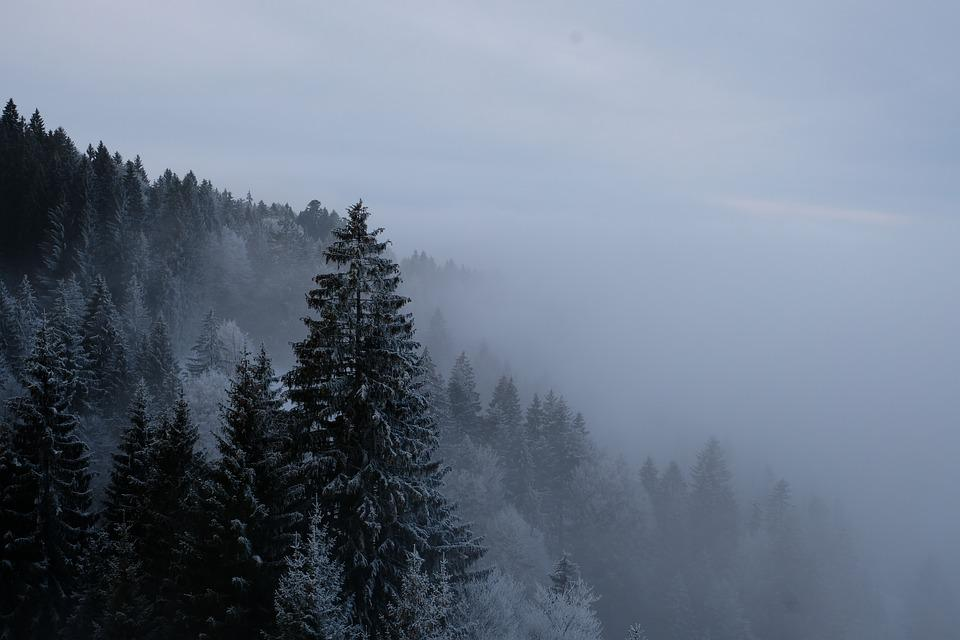 Winter, Forest, Fog, Snow, Landscape, Trees, Cold