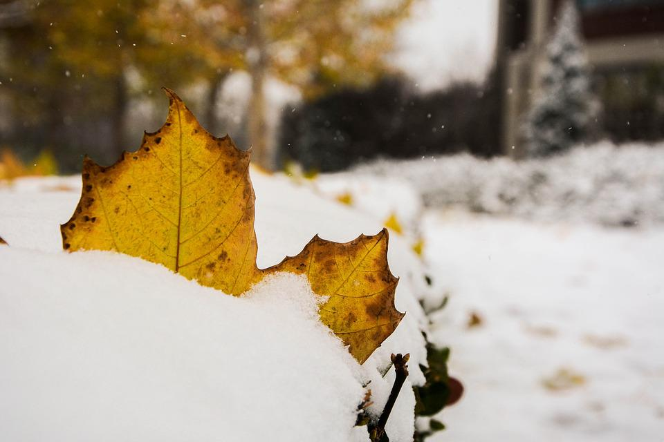 The Leaves, Winter, Photo, Snow, Autumn