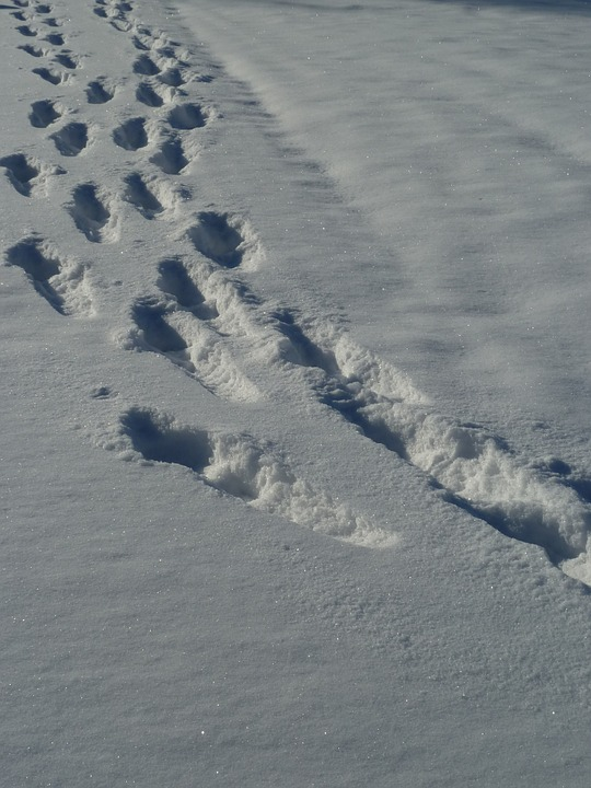Snow, Traces, Winter, Snow Lane, Wintry, Trace