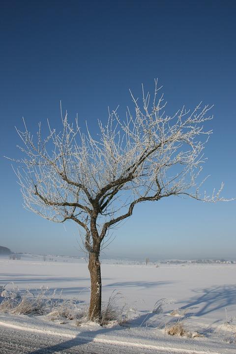 Winter, Tree, Snow, Aesthetic, Cold, Blue, Sky, Wintry