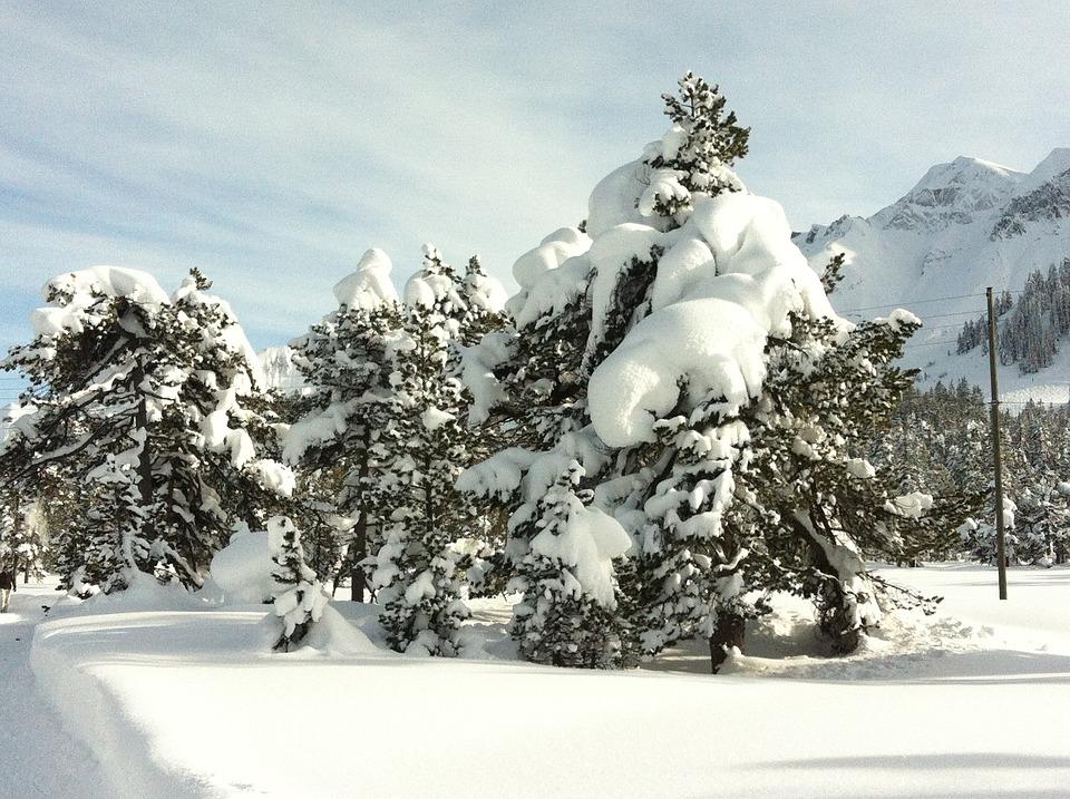 Snow, Wintry, Tree, Cold, Winter Blast, Switzerland