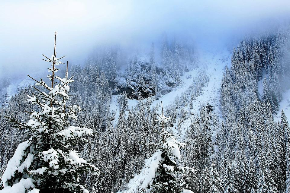 Mountains, Spruce, Snow-covered Trees, Forest, View