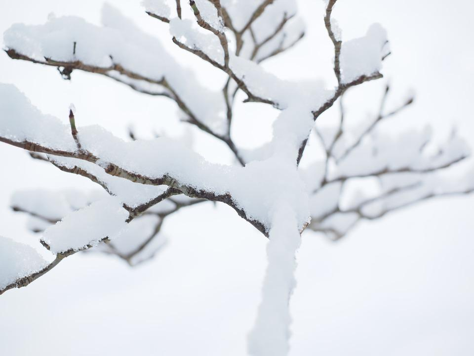 Aesthetic, Winter, Snow, Trees, Snowed In