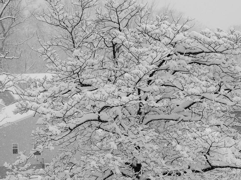 Winter, Snow, Tree, Cold, White, Season, Snowflake