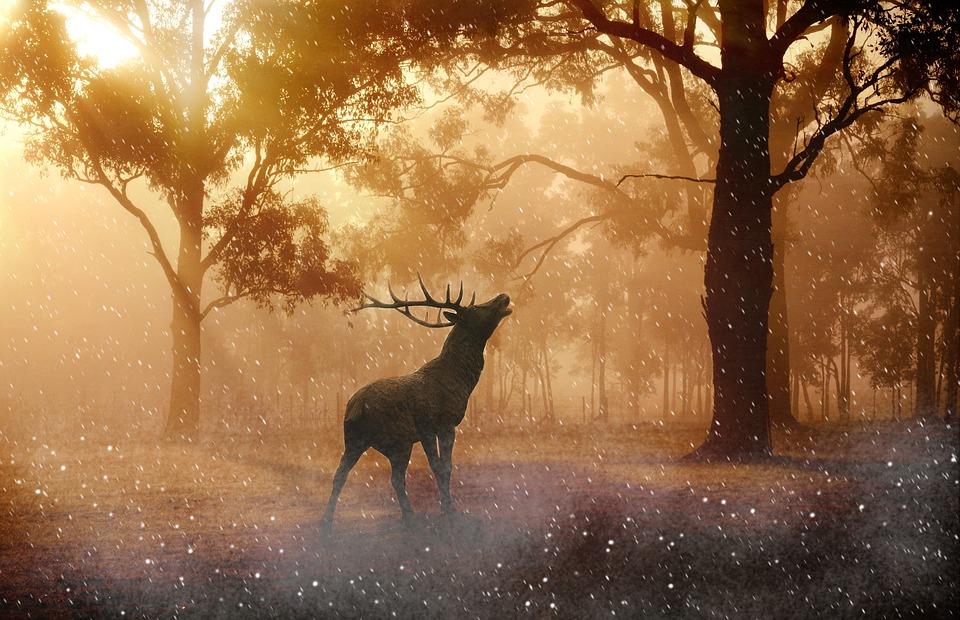 Deer, Antlers, Wild, Nature, Forest, Meadow, Snowflakes