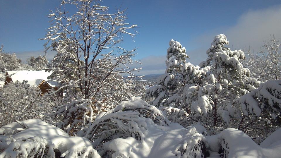 Snowscape, Winter, Winter Magic, Winter Dream