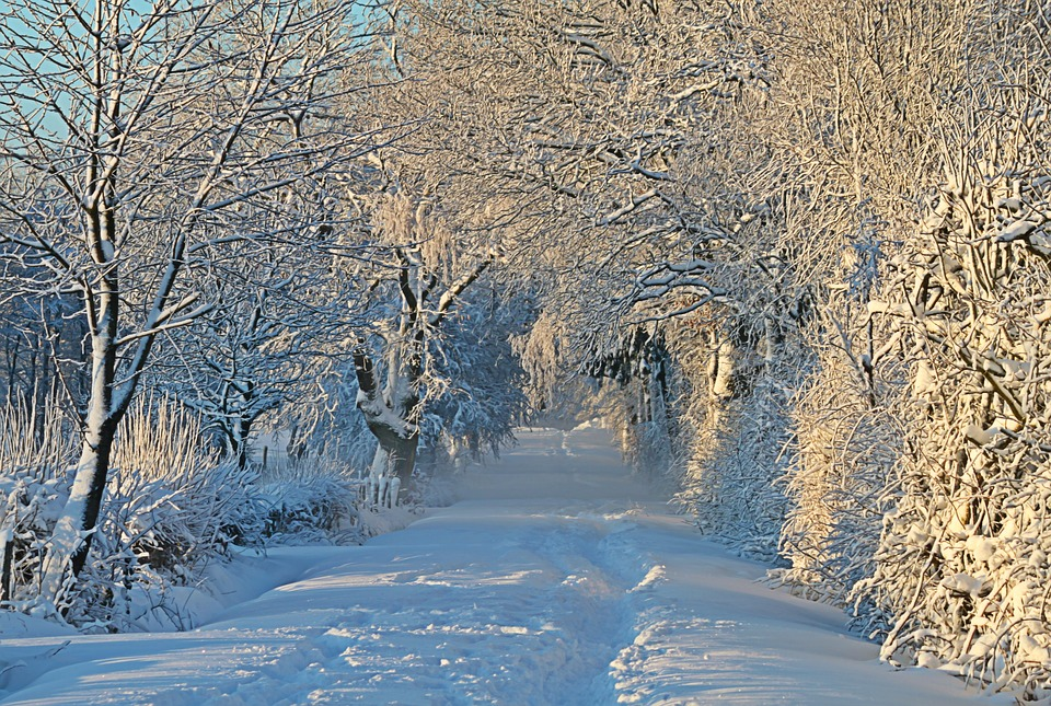 Winter, Wintry, Snow, Snow Landscape, Snowy, Snow Lane