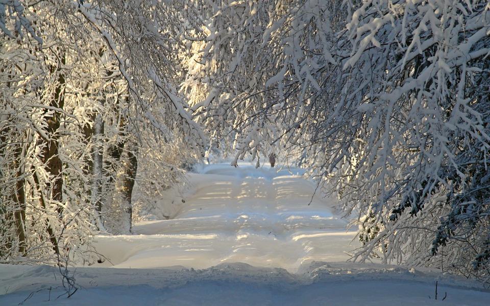 Winter, Wintry, Snow, Snow Landscape, Snowy, Snow Lane
