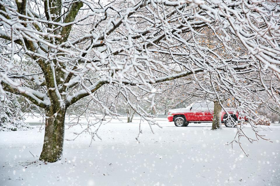 Snow, Snowy, Winter, Nature, Landscape, Trees, White