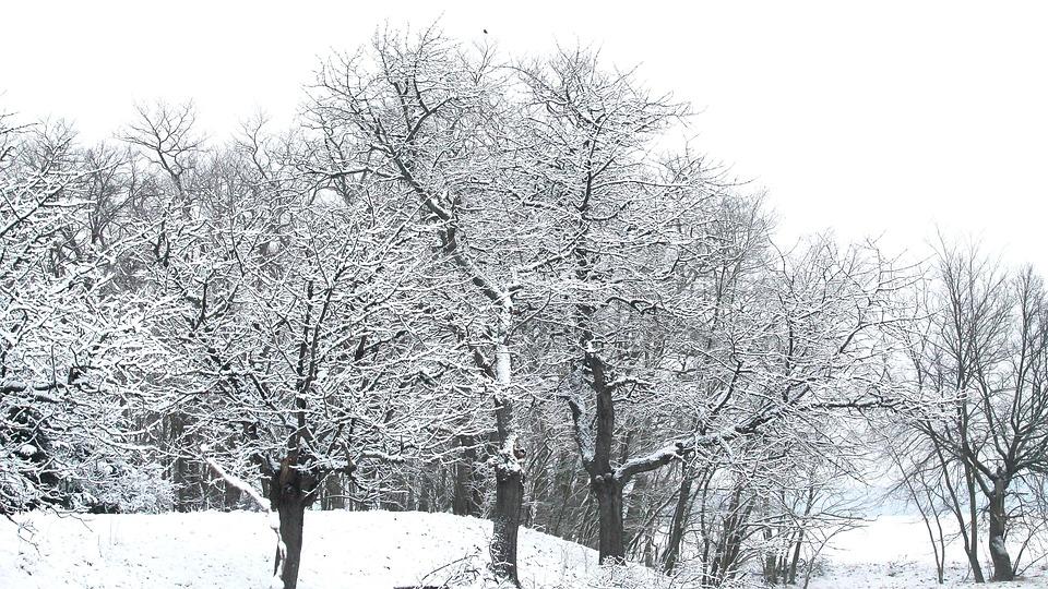 Winter, Snow, Hoarfrost, Wintry, White, Snowy