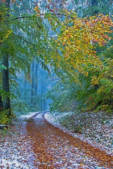 Winter Blast, Leaves, Wintry, Snowy, Snow Load