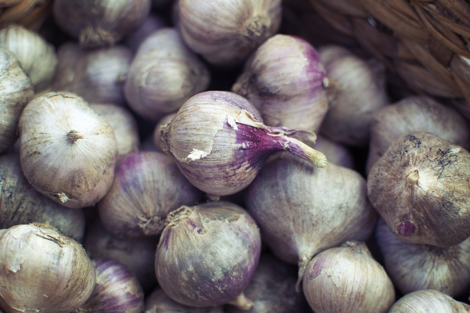 Instagram, Blog, Social, Media, Foodie, Onion, Garlic