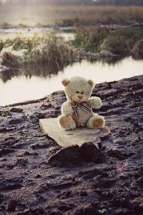 Teddy, Teddy Bear, Bear, Soft Toy, Bears