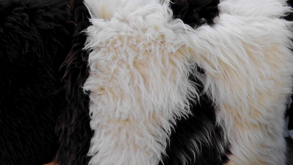 Fur, Animal, Furry, Hair, Animals, Wool, Soft, White