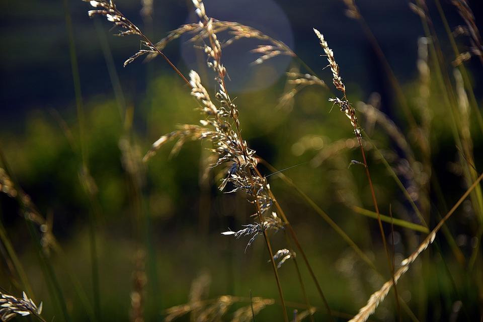 Grass, Green, Nature, Green Grass, Soil, Environment