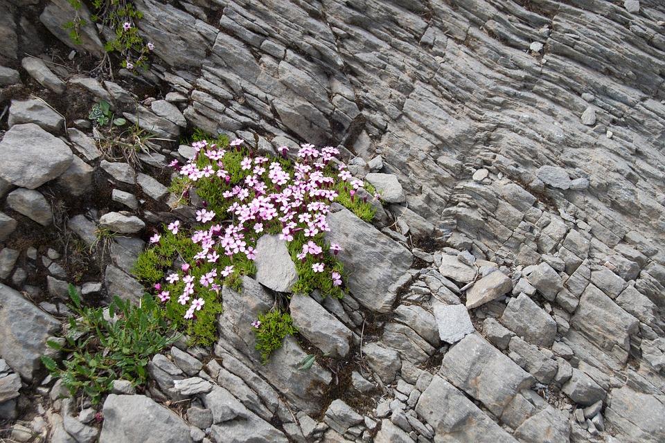 Roche, Pierre, Nature, Plant, Flower, Hiking, Soil