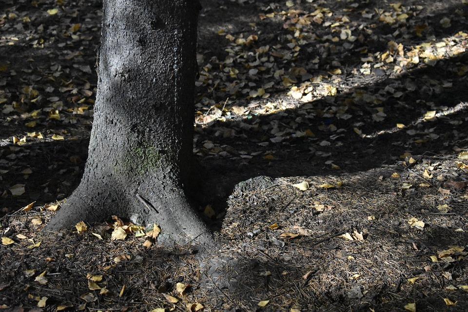 Forest, Spruce, Trunk, Needle, Soil, Fallen, Nature
