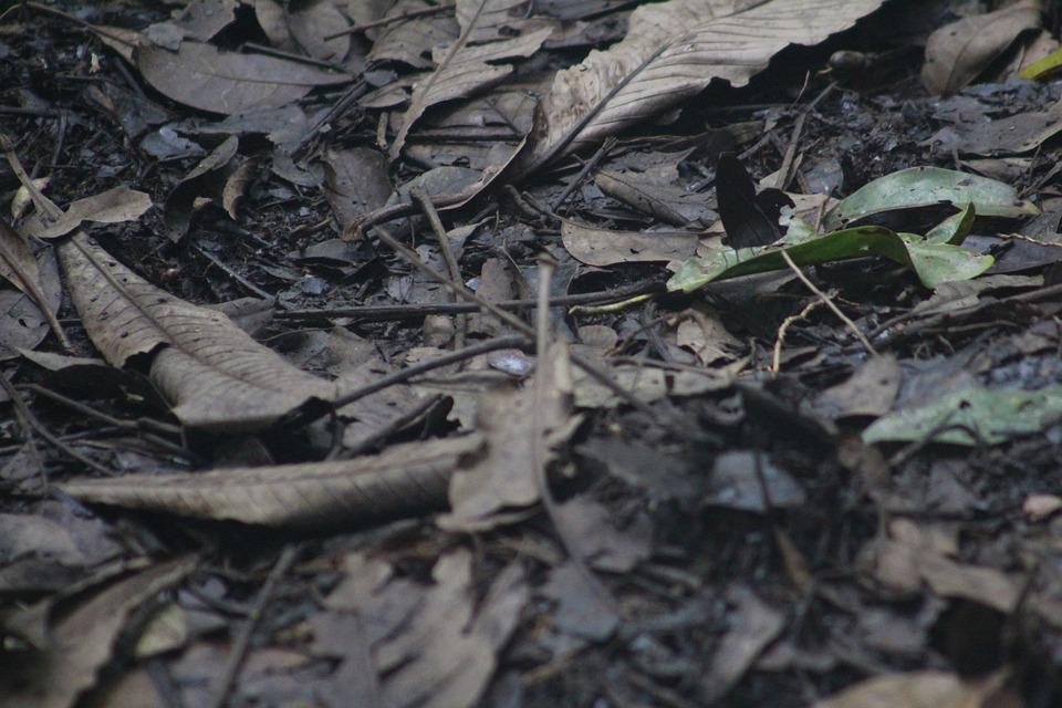 Leaves, Foliage, Soil, Ground, Nature, Amazonia, Forest