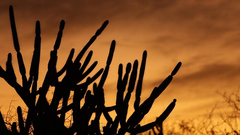 Cactus, Serrated, Sol, Sunset, Desert, Silhouette