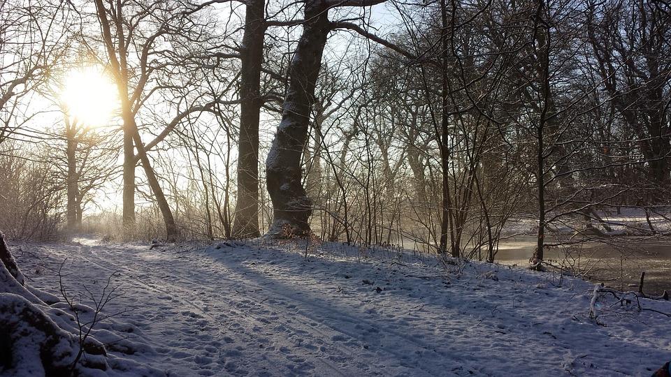 Winter, Sol, Landscape, Trees