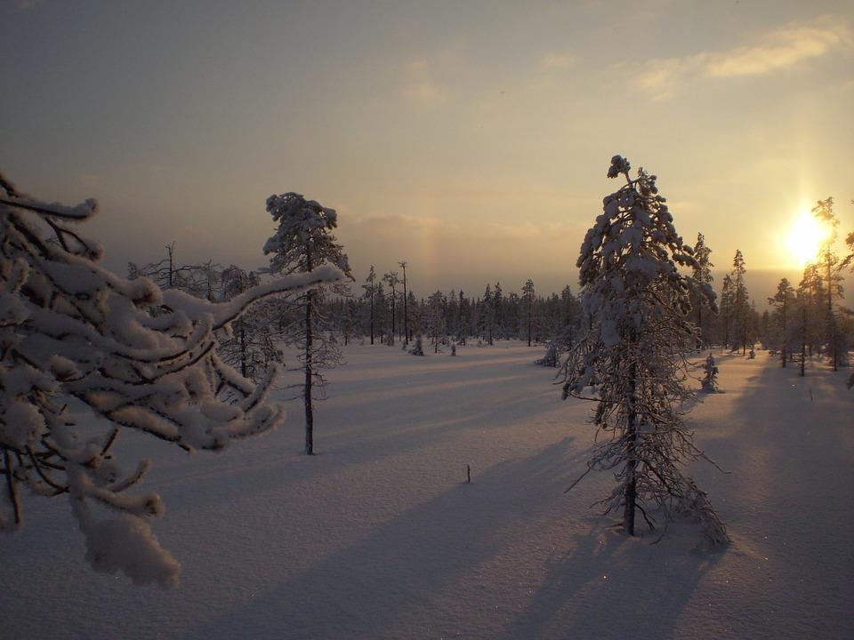 Winter, Myr, Solar, Snow, Tree, Evening, Sunset, Forest