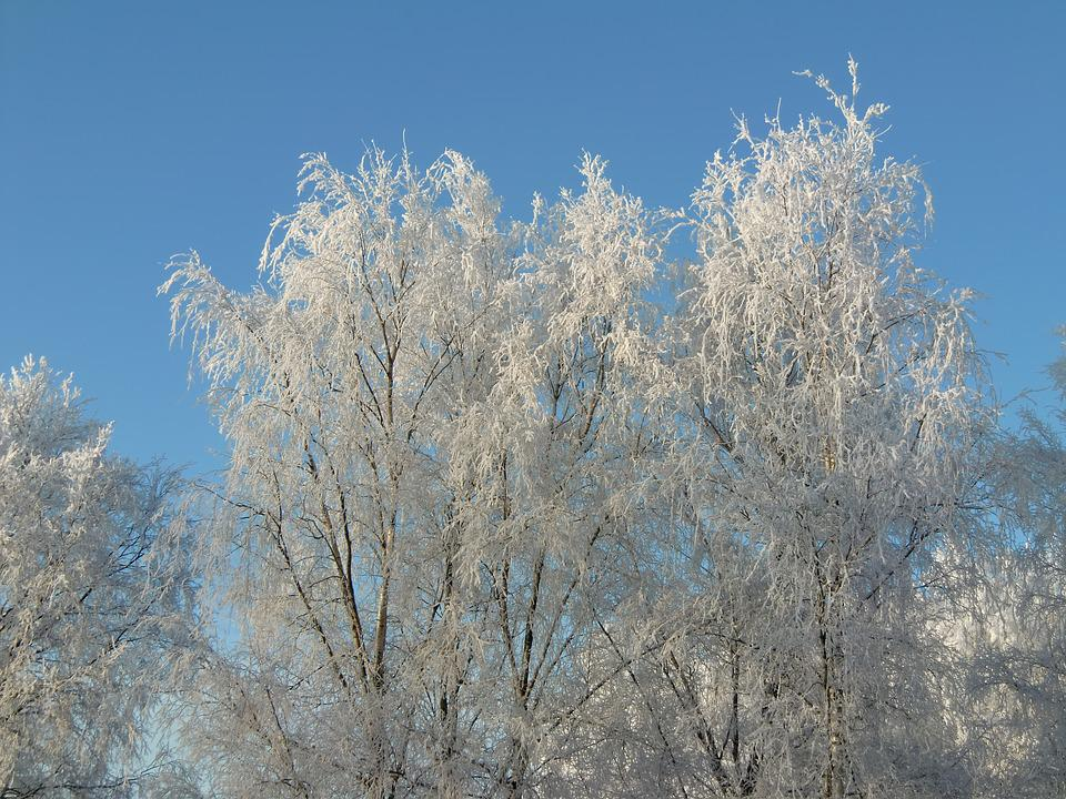 Winter, Frost, Nature, Ice, Crystal, Solar, Tree