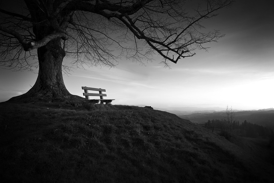 Tree, Bench, Solitude, Landscape, Black And White