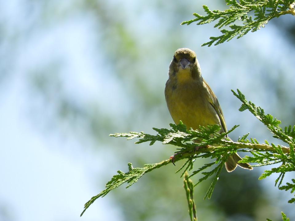 Bird, Garden, Branch, Birds, Songbird