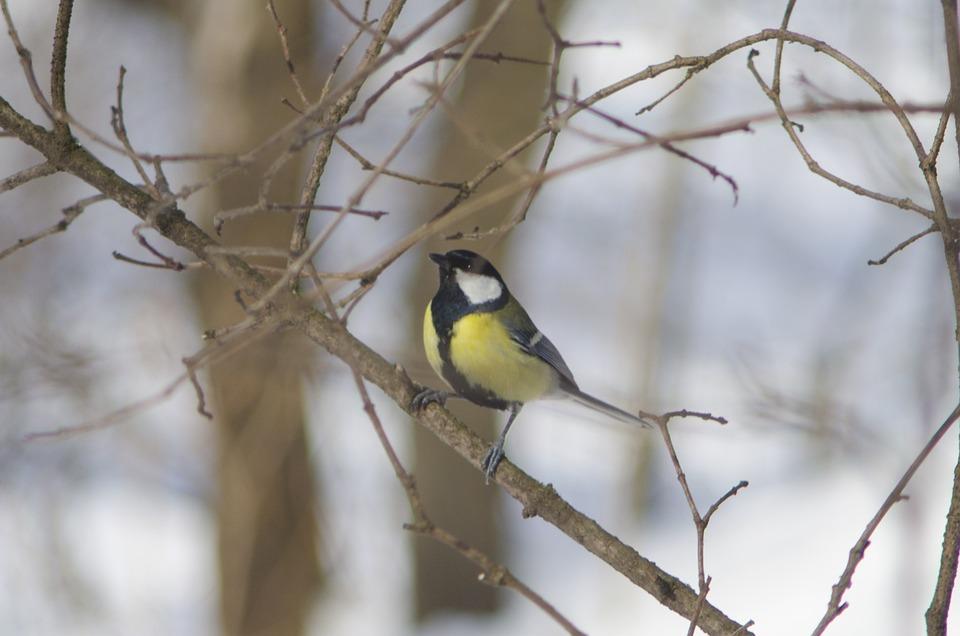 Bird, Nature, Living Nature, Outdoors, Songbird, Tree