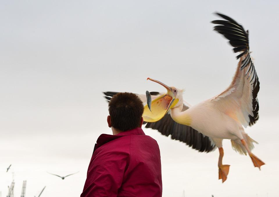 Namibia, Travel, Sossusvlei, Pelicans, Sea