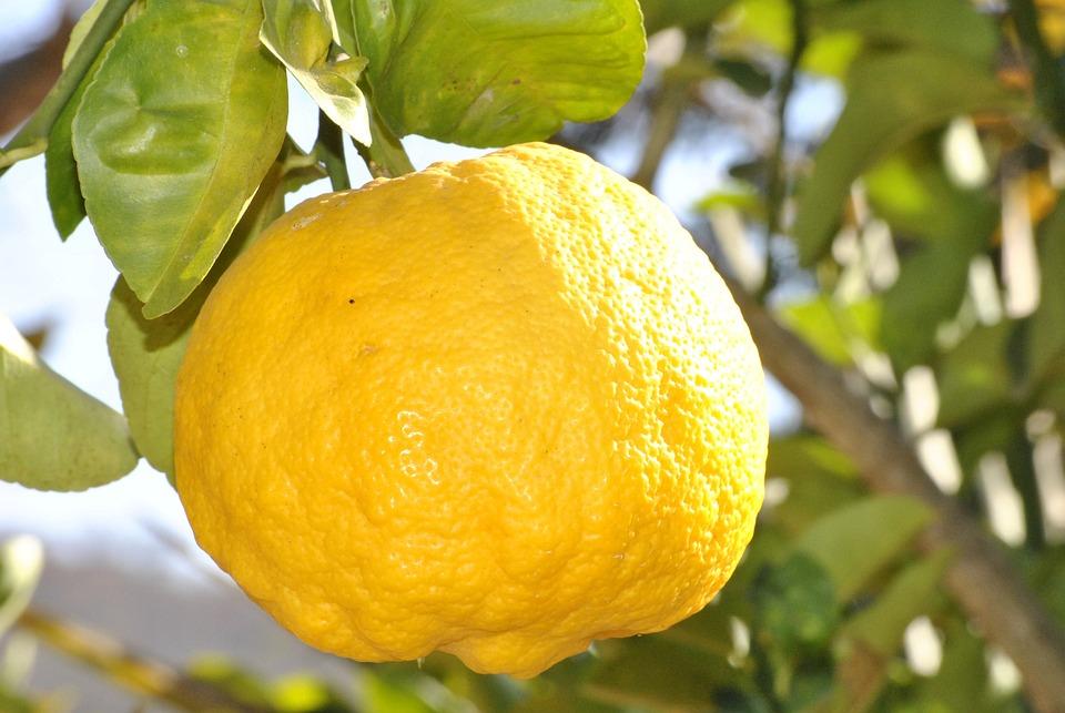 Lemon, Orange, Fruit, Citrine, Food, Sour, Azeda