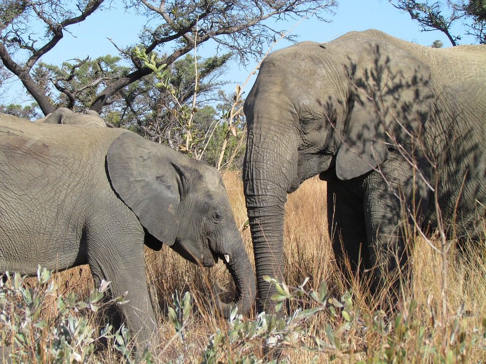 Elephants, Baby, Africa, South Africa, Wildlife, Nature