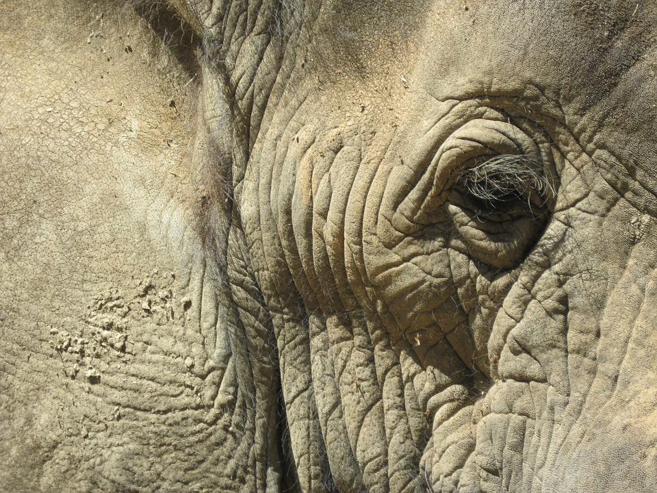 South Africa, Head, Elephant