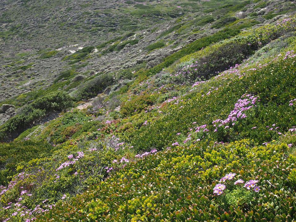 Heide, Cape Of Good Hope, Plant, Green, South Africa
