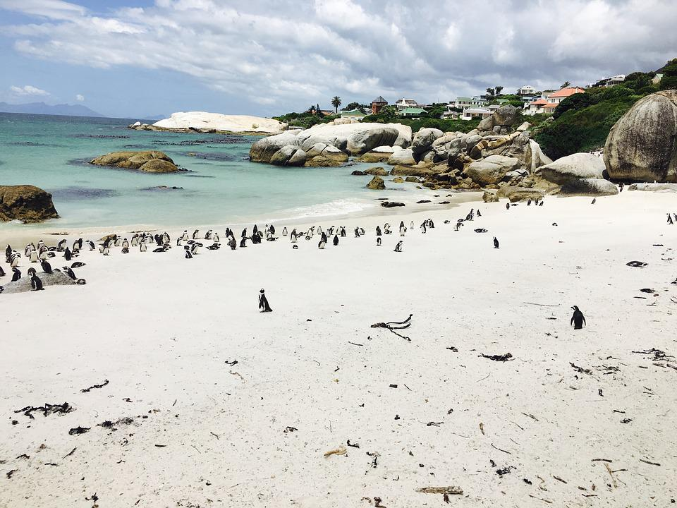 Penguins, South Africa, Booked, Boulders Beach, Sand