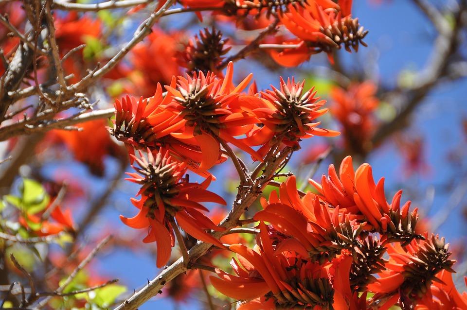 South Africa, Spring, Gauteng