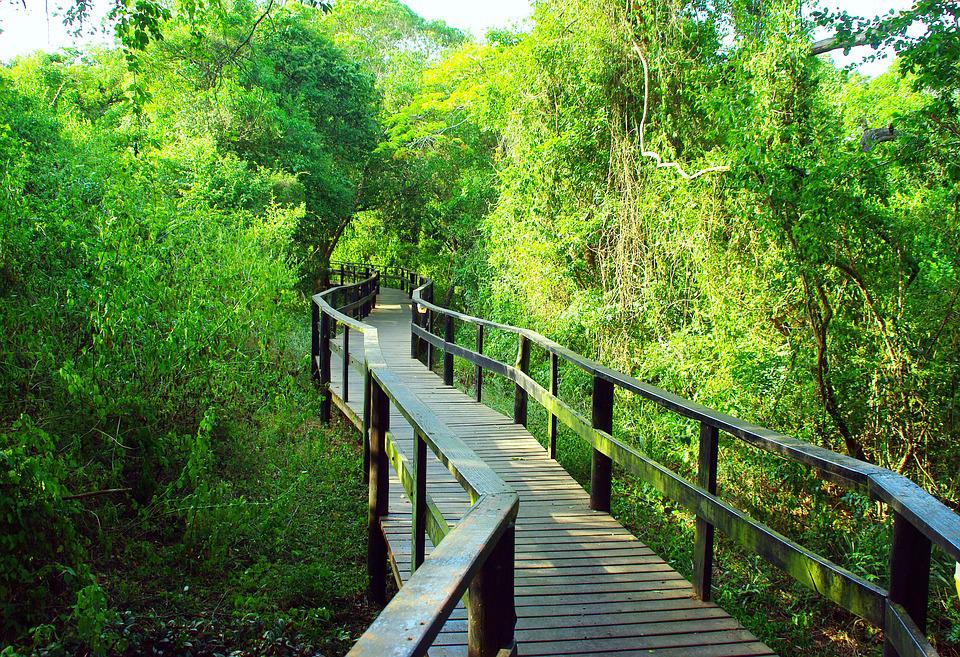 South Africa, Bridge, Forest, Wilderness Area